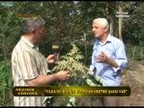 Arıncının Günlüğü - Polen Ağaçı